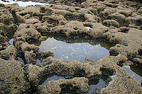 Rockpools in the Burren County Clare