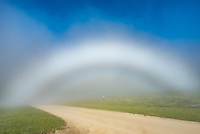 I've seen fogbows before, but they are so transient they're difficult to capture. The fog must be just the right thickness with the sun at just the right angle. The fog was moving around so much it changed by the second. This was on Red Grade Road in the Bighorn Mountains.