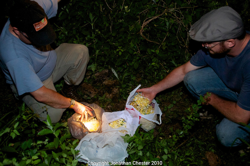 Jonathan Justus Foraging Honeysuckle flowers