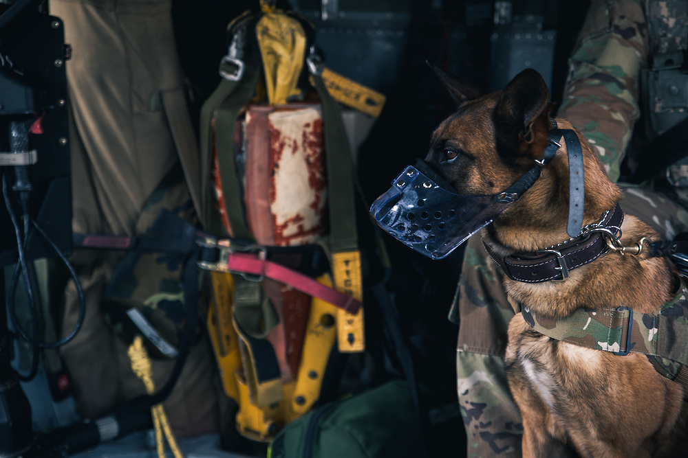 """603rd MP Military Working Dog Flight Familiarization with C Co. 2-3 GSAB, """"Dustoff"""" 2CAB"""