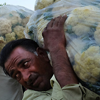 Workers unload cauliflower from a truck delivering to the Mandi Wholesale produce market in Jwalapur, India.<br /> Photo by Shmuel Thaler <br /> shmuel_thaler@yahoo.com www.shmuelthaler.com