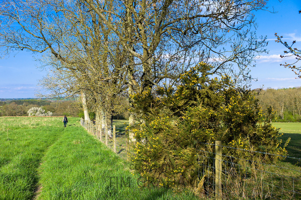 Walker enjoys country walk on at Bruern in The Cotswolds, Oxfordshire, UK
