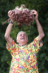 © Licensed to London News Pictures. 18/09/2015. Harrogate, UK. Picture shows Ian Neale's & his first prize winning Beetroot at the Giant Veg competition at the Harrogate Autumn Flower show. Photo credit: Andrew McCaren/LNP