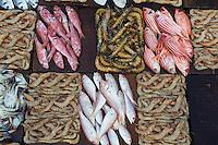 Egypte, la côte méditerranéenne, Alexandrie, le marché aux poissons. // Egypt, Alexandria, fish market.