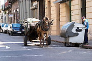 A horse drawn cart on a street in the city and two young boys searching in the rubbish dust bin for something useful Montevideo, Uruguay, South America