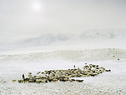 """A goat and sheep herd is leaving in the morning. Wolf attack on livestock is common and shepherd are often armed.<br /> <br /> Campment of the """"second"""" Sary Tash. Ustad's Ghulam's camp.<br /> Winter expedition through the Wakhan Corridor and into the Afghan Pamir mountains, to document the life of the Afghan Kyrgyz tribe. January/February 2008. Afghanistan"""