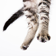 Jumping cat photographed while waiting for adoption.  Pet photography by Michael Kloth.