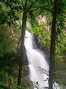 La Mina Falls, El Yunque Falls, Puerto RIco.