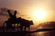 Sri Lanka. South Coast, two boys on a bullock cart.