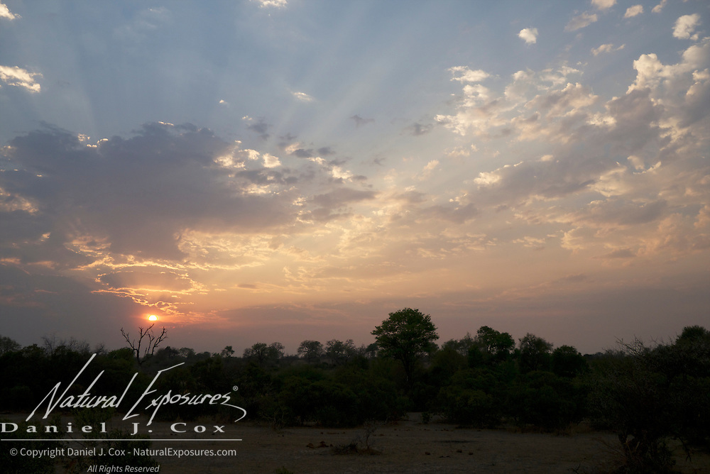 Sun sets over the African bush,  Londolozi Game Reserve, South Africa.