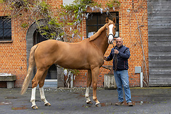 Block Peter, Quenten Tarantina HWS<br /> Horse World Stables - Essen 2021<br /> © Hippo Foto - Dirk Caremans<br /> 15/05/2021