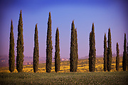 A line of cypress trees border a lush green field in the Tuscan countryside of Italy.