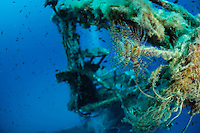 Fan worm (Spirographis spallanzani) at P29 patrol boat, which was originally built by Peene Werft ship yard as a minesweeper for the German naivy, Gozo, Maltese Islands
