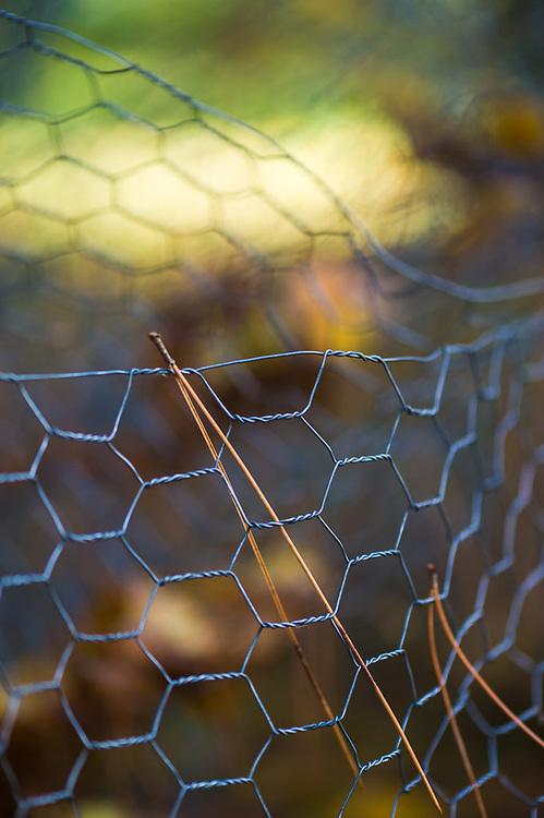 Pine needles, chicken wire mesh fencing, Hubbard County, Minnesota, USA
