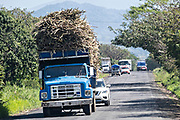 Overloaded trucks carrying cut sugar cane travel down the tiny two lane route 180 near Catemaco, Veracruz, Mexico.