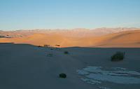 Mesquite Flat sand dunes at sunrise, Death Valley National Park, California