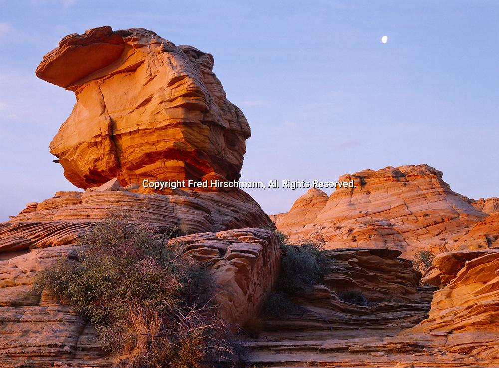 Wind-sculpted Navajo Sandstone monoliths illuminated at sunrise with setting moon, Vermilion Cliffs National Monument, Paria-Vermilion Cliffs Wilderness, Arizona.
