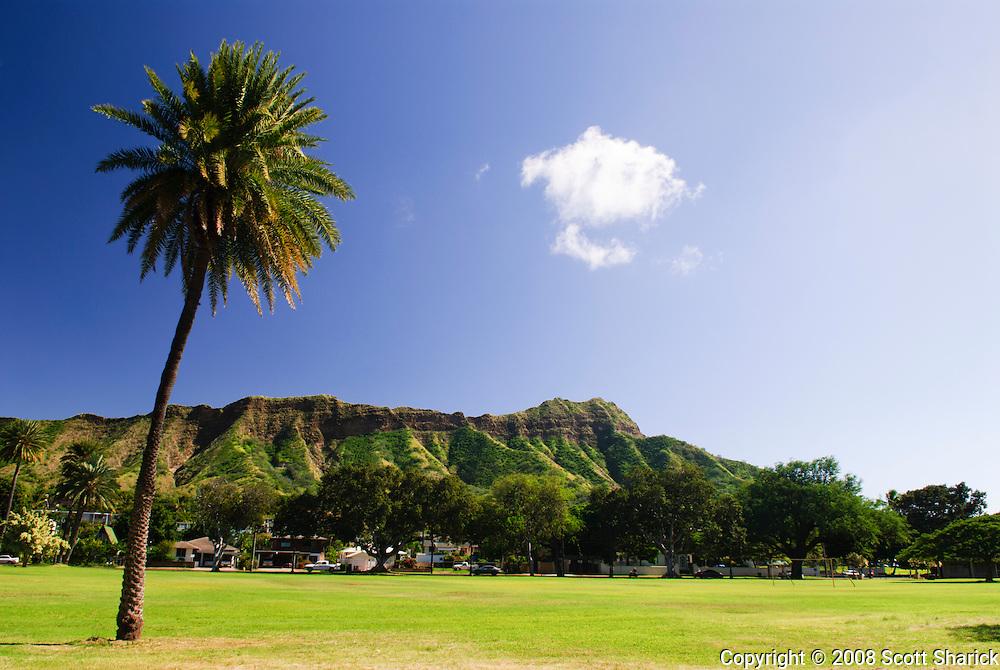 A single palm tree in front of Diamond Head Crater in Kapi'olani park in Waikiki