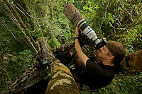 Photographer Tim Laman shooting King Bird of Paradise from a canopy platform in lowland rain forest.