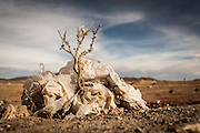 10/11/2014 - Uyuni, Bolivia: Plastic tree #25. Plastic bags are part of the landscape of the Bolivian Altiplano. The accumulation of plastic bags on the environment cause deterioration of the landscapes and agriculture soils and it is associated to the death of domestic and wild animals.