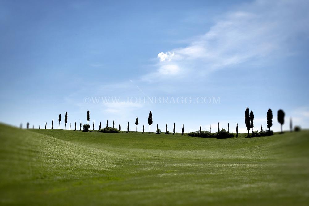 A line of Cypress trees along the horizon of Tuscany, Italy.