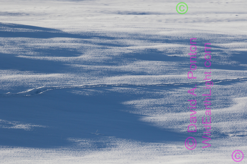 Trail left in snow by elk herd passing in single file, Valle Grande, Valles Caldera National Preserve, Jemez Mountains, NM, © David A. Ponton