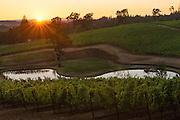 Eola Hills Vineyards, Eola Hills AVA, Willamette Valley, Oregon