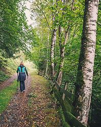 THEMENBILD - eine Frau wandert mit Stöcken einen Waldweg entlang. Birkenbäume und eine alter Holzzaun säumen den Weg, aufgenommen am 29. September 2019, Piesendorf, Österreich // a woman walks with sticks along a forest path. Birch trees and an old wooden fence line the path on 2019/09/29, Piesendorf, Austria. EXPA Pictures © 2019, PhotoCredit: EXPA/ Stefanie Oberhauser