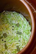 Sauerkraut in the crock, awaiting fermentation.