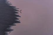 Yamuna River<br /> Agra<br /> Uttar Pradesh,  India