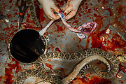 A rattlesnake is gutted and skinned at a demonstration area during the Sweetwater Rattlesnake Roundup at Nolan County Coliseum in Sweetwater, Texas, U.S., March 10, 2018.