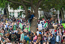 London, June 20th 2015. Thousands of people converge on the streets of London to join the People's Assembly Against Austerity's march from the Bank of England to Parliament Square. PICTURED: Young men scramble up a tree in Parliament Square as they try to find a vantage point to listen to the speakers at the post-march rally.