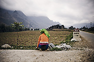 An ethnic woman harvests some herbs along the road. Ha Giang Province, Vietnam, Asia
