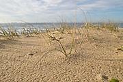 Dune Regeneration, East Coast Australia