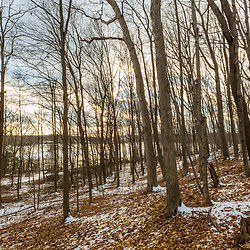 The forest above Indian Hill Reservoir in West Newbury, Massachusetts.