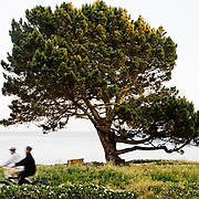 Two people biking in a park along the ocean in Santa Cruz, California.<br /> <br /> + ART PRINTS +<br /> To order prints or cards of this image, visit:<br /> http://greg-stechishin.artistwebsites.com/featured/santa-cruz-afternoon-greg-stechishin.html