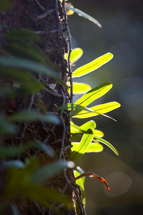 Araxa_MG, Brasil...Trepadeira em uma arvore em Araxa, Minas Gerais...The plant on a tree in Araxa, Minas Gerais...Foto: LEO DRUMOND / NITRO
