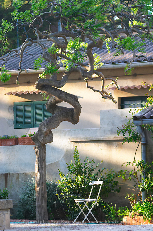 A white garden chair on gravel and a queer odd twisted tree in afternoon warm sunshine Clos des Iles Le Brusc Six Fours Cote d'Azur Var France