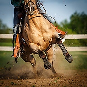 20150509 Riding Girls and Horses