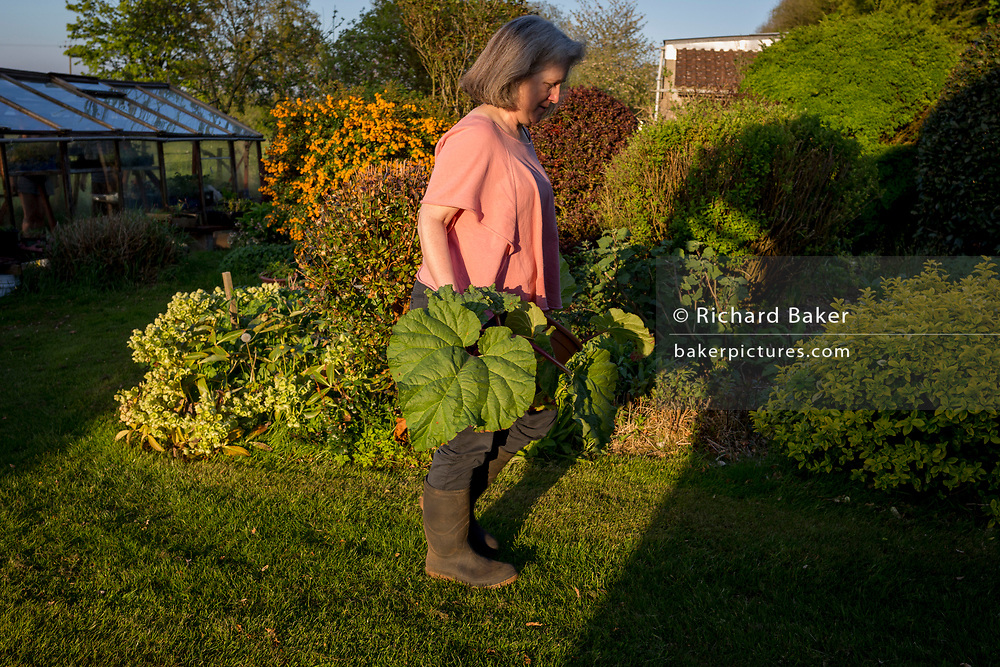 A middle-aged lady carries homegrown produce from her greenhouse in her rural garden, on 5th May 2018, in Wrington, North Somerset, England.