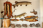 Wooden carving and taxidermy Muskie fish at a country store in the Northwoods village of Boulder Junction, Wisconsin.