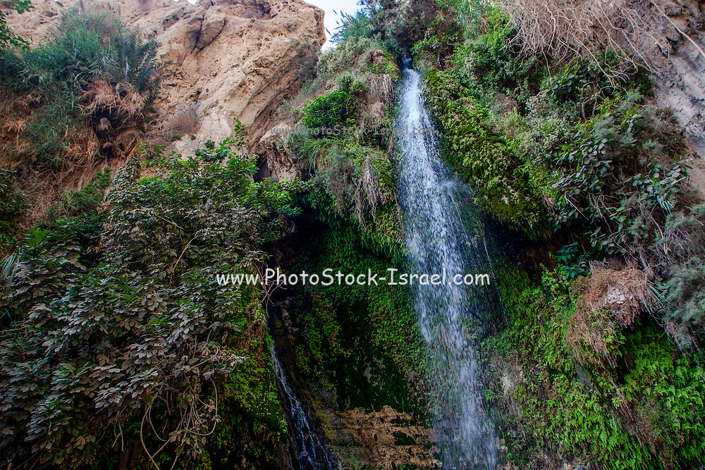Ein Gedi sweet water springs, in the Judean desert, Israel, the lower waterfall in Wadi David nature reserve