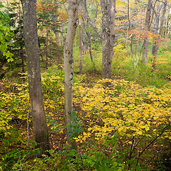 Fall foliage in a forest at the Benjamin Farm in Scarborough, Maine.