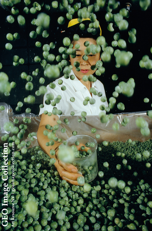 A farm worker checks frozen peas for color and maturity.