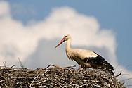 White stork (Ciconia ciconia) nesting on a roof in the village of Cigoc, Lonjsko polje nature park, Croatia © Rudolf Abraham