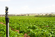 Israel, Sharon District, A sprinkler in a Potato field