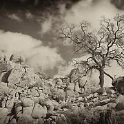 Desert Oak Large Rock Hill Wide View - Sepia Black & White
