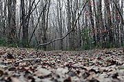 low angle perspective of path in the woods