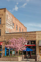 """""""Downtown Truckee 17"""" - Photograph of brick buildings in historic Downtown Truckee, California with a blossoming crabapple tree in the foreground."""