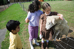 Children stroking a sheep on a visit to a city farm,
